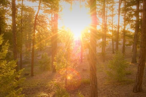 Forest Sunburst - mellowtree