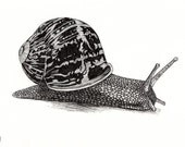 Another Snail - Daily Drawing No. 8 - ouroboros81