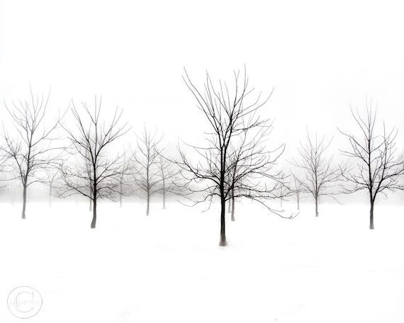 "Black Walnut Tree Print 8"" X 10"" Black and White Minimalistic, Fog and Trees - BeneathNorthernSkies"