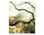 Mardi Gras Beads - surreal photograph - New Orleans Photography - tree nature photography - 8x10 print - home decor - fine art phtoography - JillianAudreyDesigns