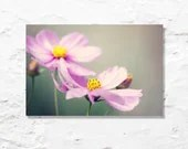 flower photograph pink cosmos fine art photography wall decor garden nature photo floral - geishaphotography