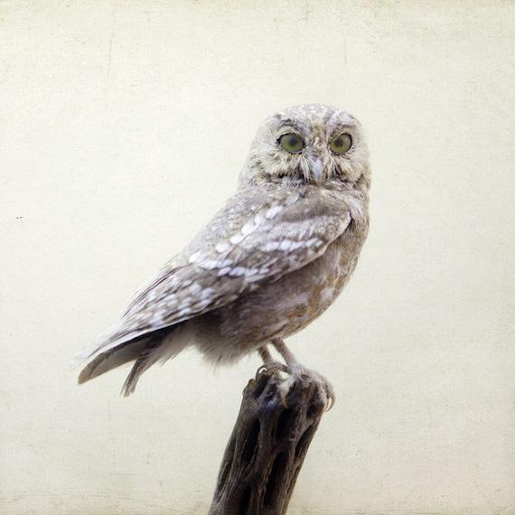 Owl photograph - Intelligent Design - Fine art bird photograph - Nature photography - Bird in pale winter ivory white