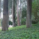 Ground Cover Plants Tips For Planting Ground Covers Under A Tree Dummer Garden Manage Gfinger Es La App De Jardineria Mas Profesional