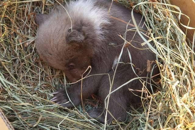 Mailbombing per salvare l orsetto triste del Kosovo