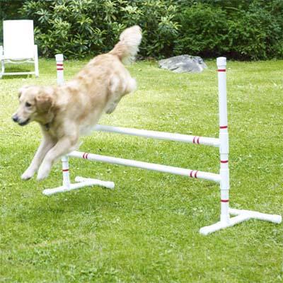 dog jumping over jump bars in yard