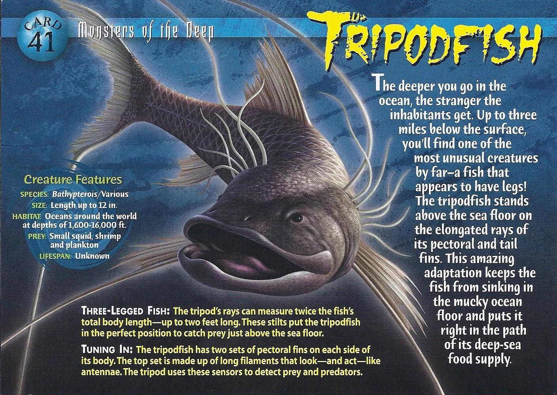 Tripodfish Wierd Nwild Creatures Wiki