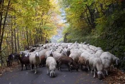 Senza categoria storie di pascolo vagante pagina 105 - La pagina della colorazione delle pecore smarrite ...