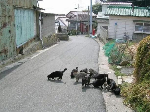249589635418d3bcaf80o - Tashiro, la Isla de los Gatos
