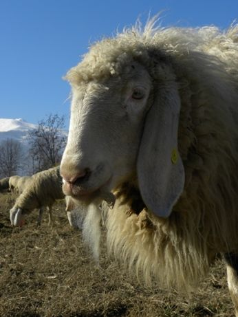 Febbraio 2011 storie di pascolo vagante pagina 2 - La pagina della colorazione delle pecore smarrite ...