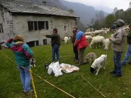 Pastori storie di pascolo vagante pagina 22 - La pagina della colorazione delle pecore smarrite ...
