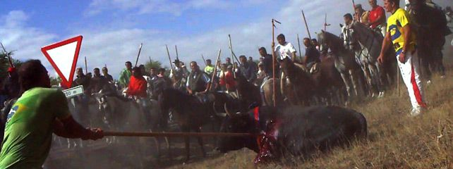 1253030341371igual4col - Antitaurinos lanceados en lugar del animal en la sangrienta fiesta del Toro de la Vega