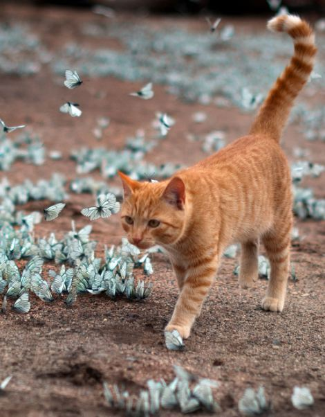Gato jugando con mariposas azules