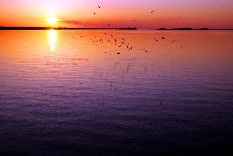 Flight - 8x10 Photograph - Sunset Sunrise Purple Pink Orange Yellow Lake Murray Water Nautical Fine Art Metallic Print - FlashForward