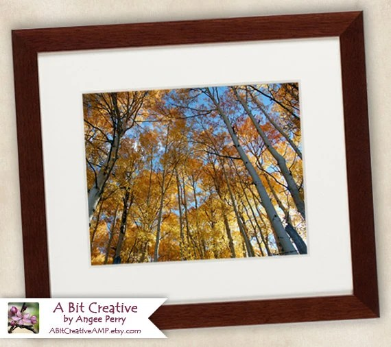 "Landscape Photography - fine art print Aspen nature Rocky Mountains Colorado - 11x14 Photograph ""Autumn Aspen Canopy"" - ABitCreativeAMP"