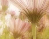 """Flower photography - Spring gardening fresh flowers - Cottage decor - Soft pastel tones - 8x8 """"Sunshine"""" - AlezuArt"""