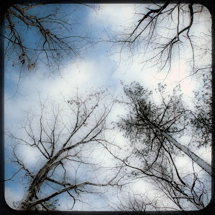 "Tree photography snow winter branches sky clouds blue white  ""Up Above"" 8x8 photo art print"
