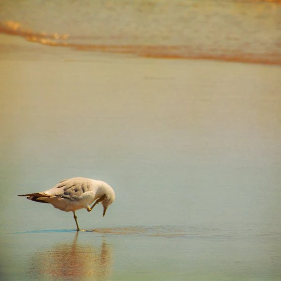 Bird photography beach photo seagull sea shore golden sunset burnt orange peach teal wall art home decor