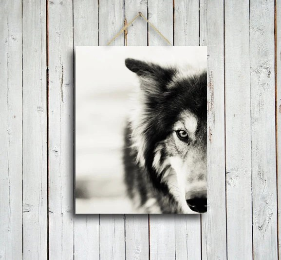The Wolf - Wolf photo - Wolf decor - Native American style decor - Black and White wolf - Wolf dog photo - Wolf photography