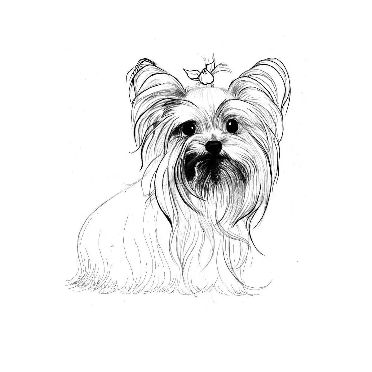 Boston Terrier Coloring Pages To Print Coloring Pages