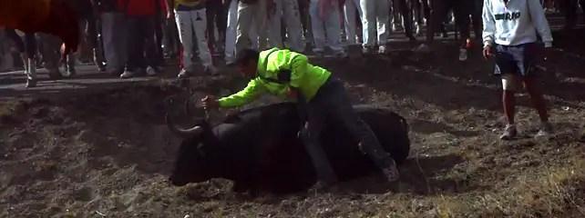 1253029392984igualdad4c - Antitaurinos lanceados en lugar del animal en la sangrienta fiesta del Toro de la Vega