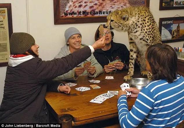 article0057d7d95000005d - Riana Van Nieuwenhuizen vive, duerme y juega cartas con su ejercito de felinos