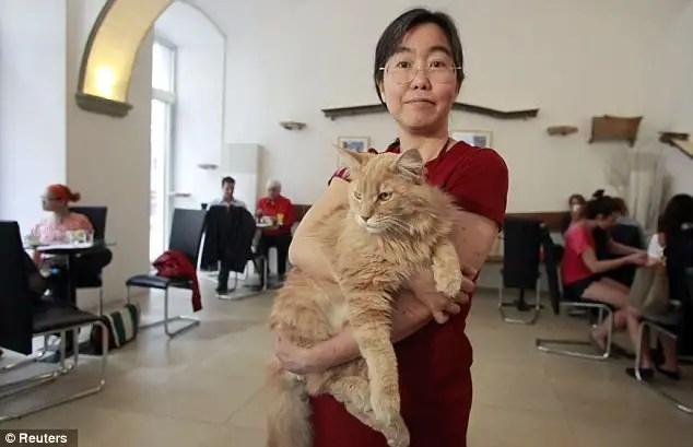 article214612112f87c260 - En Viena abren el primer café para gatos de Europa