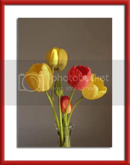 Tulips pics by Arun Shanbhag