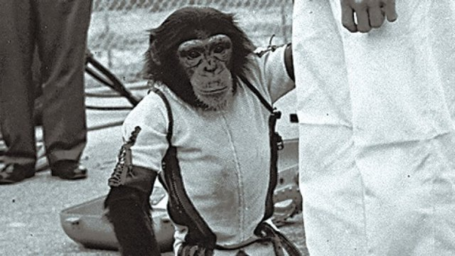 nasa chimpanzee