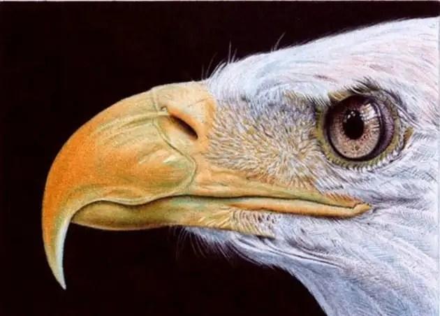 48144416 - Fotos ultra realistas dibujadas con bolígrafos