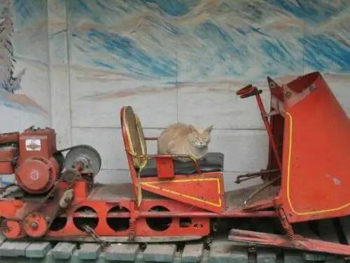 alcaldegato17 - El alcalde de un pueblo de Alaska es un gato (un gato de verdad)