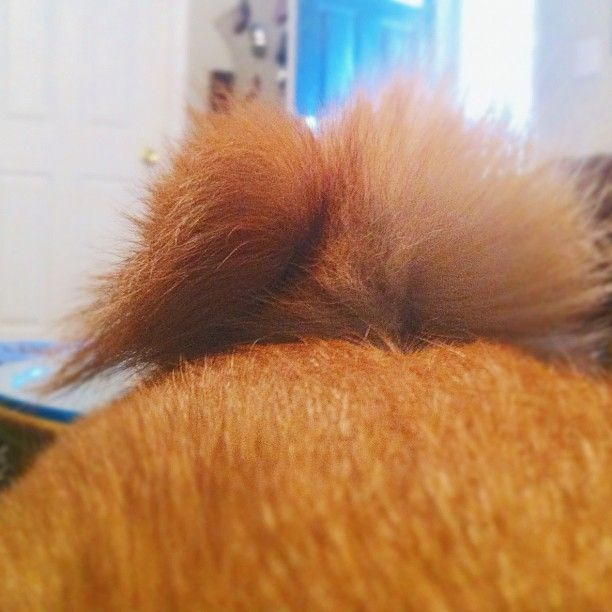 I love this tail