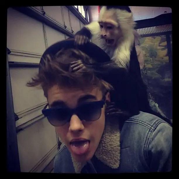 4e1f51ba5c6911e2b3af220 - Mally, el mono capuchino de Justin Bieber, es retenido en el aeropuerto de Múnich