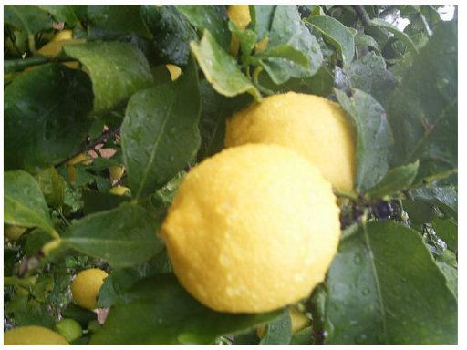 Limpiar con limones