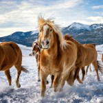 Wallpaper Winter Field The Sky Look Clouds Snow Mountains Horse Horse Tops Horses Horse Running Mane The Snow Red Images For Desktop Section Zhivotnye Download