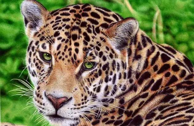 97386833 - Fotos ultra realistas dibujadas con bolígrafos