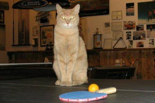 alcaldegato22 - El alcalde de un pueblo de Alaska es un gato (un gato de verdad)