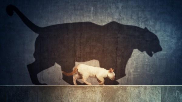 В горах Перу найден невероятно огромный древний кот — фото