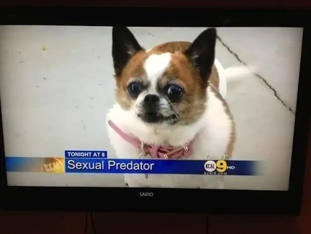 enhancedbuzz16457136380 - #Fotos 33 perros totalmente descontrolados