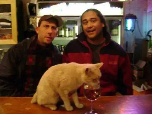 alcaldegato6 - El alcalde de un pueblo de Alaska es un gato (un gato de verdad)