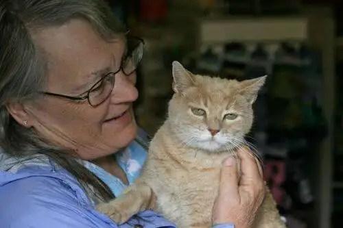 alcaldegato5 - El alcalde de un pueblo de Alaska es un gato (un gato de verdad)