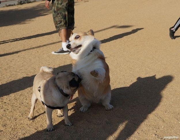 enhancedbuzz18476136380 - #Fotos 33 perros totalmente descontrolados