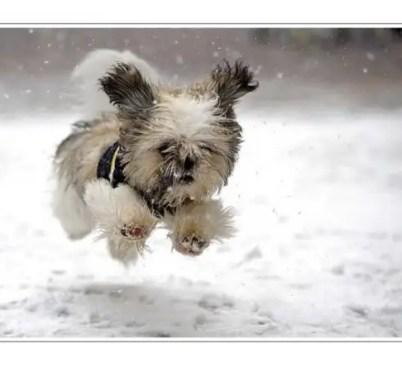 dog snow, puppy snow, anjing main salji, dog play snow,