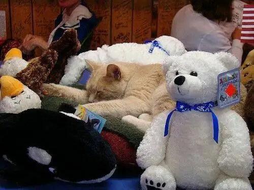 alcaldegato19 - El alcalde de un pueblo de Alaska es un gato (un gato de verdad)