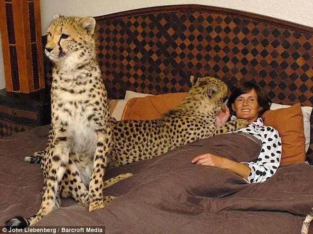 article0057d7c3e000005d - Riana Van Nieuwenhuizen vive, duerme y juega cartas con su ejercito de felinos