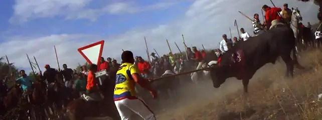 1253029765012igualdad24 - Antitaurinos lanceados en lugar del animal en la sangrienta fiesta del Toro de la Vega