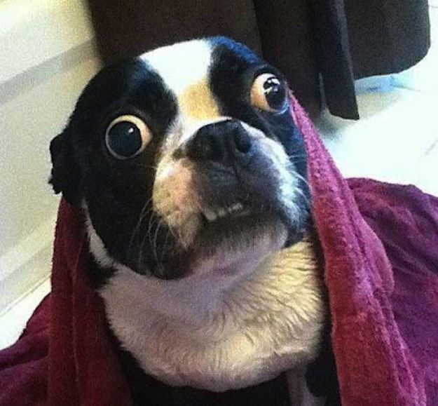 enhancedbuzz26255136380 - #Fotos 33 perros totalmente descontrolados