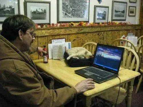 alcaldegato23 - El alcalde de un pueblo de Alaska es un gato (un gato de verdad)
