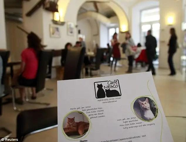 article214612112f87dbd0 - En Viena abren el primer café para gatos de Europa