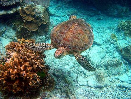 deniz kaplumbagasi3