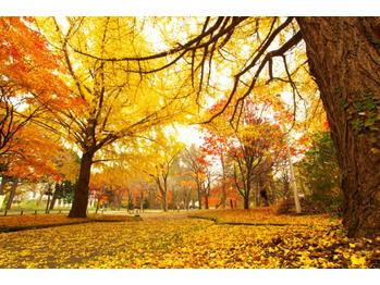 秋にむけてサロンケアをおススメします☆_20180816_1